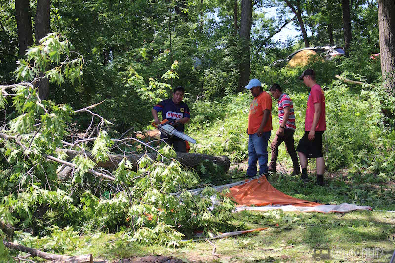 Blue Ox Tree Damage