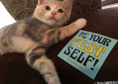 Festival Kitten
