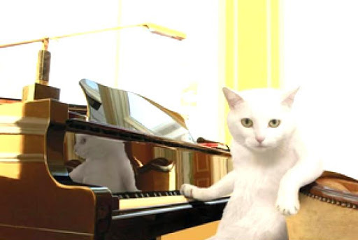 Cat Piano Lessons